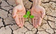 Pomoc KRUS dla poszkodowanych rolników w wyniku wystąpienia niekorzystnych zjawisk atmosferycznych w 2019 r.